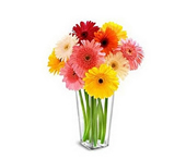 11 gerberas : Birthday