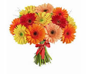15 gerberas: Birthday