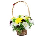 Chrysantemum mini basket: New house