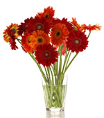 17 gerberas in two colours